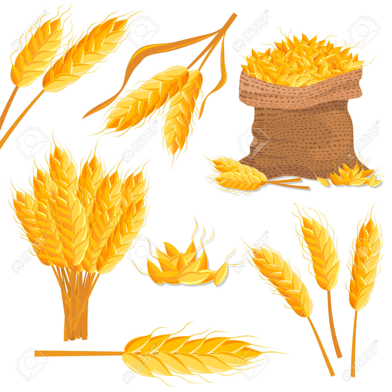 Cartoon wheat isolated set. Wheat bread ears, cereal crop harvest, grain culture vector illustration. Bakery design element, organic local farming, fresh healthy food, natural agricultural concept. - 78275548