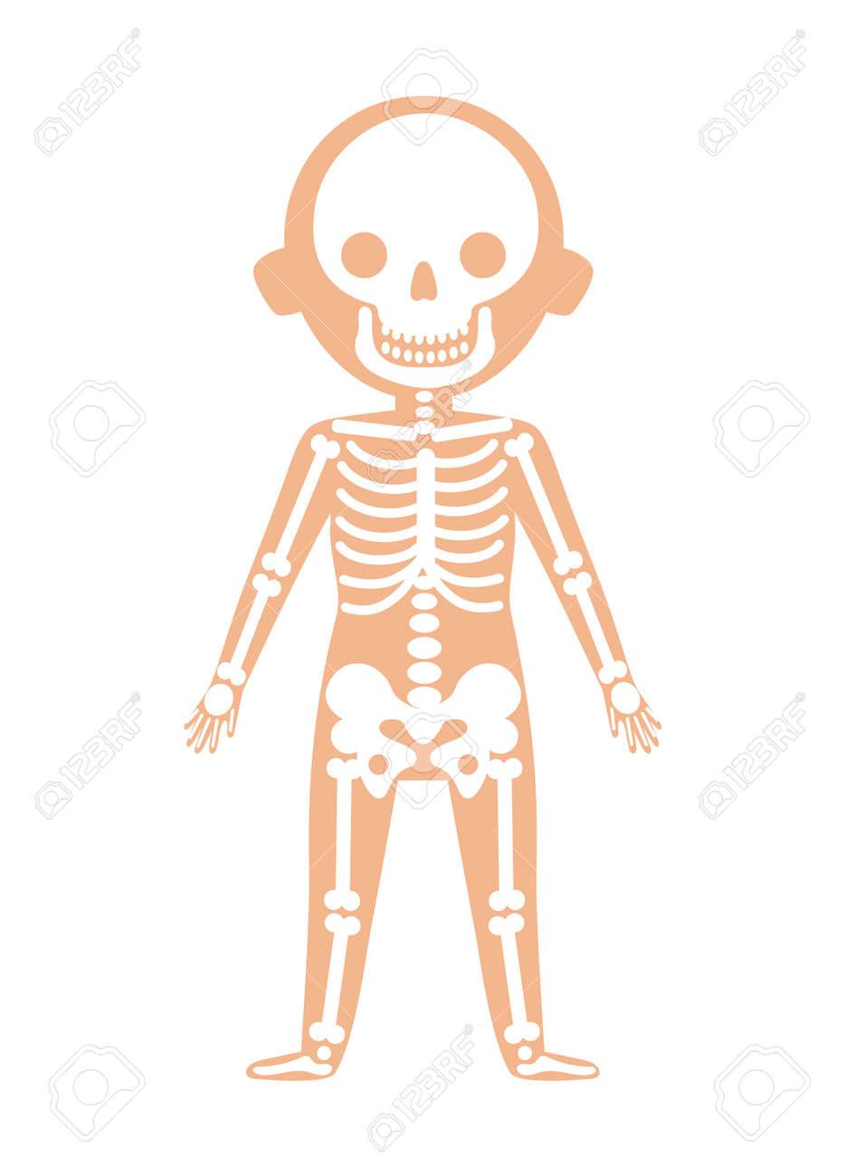 Anatomía Del Cuerpo Del Niño Con El Sistema Esquelético. Icono ...