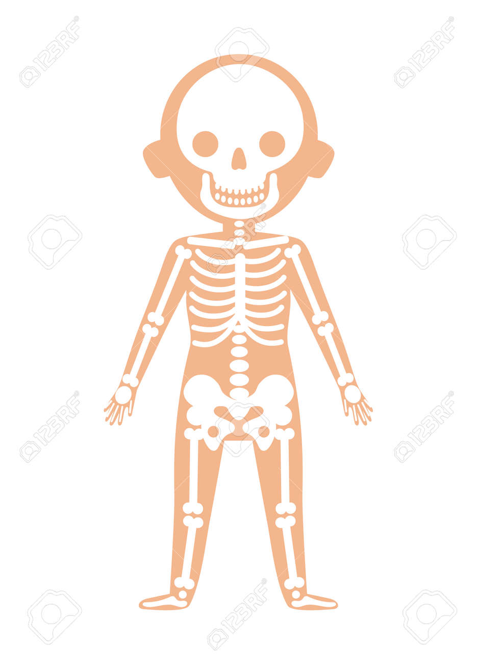 Boy Body Anatomy With Skeleton System. Health Medical Icon, Internal ...