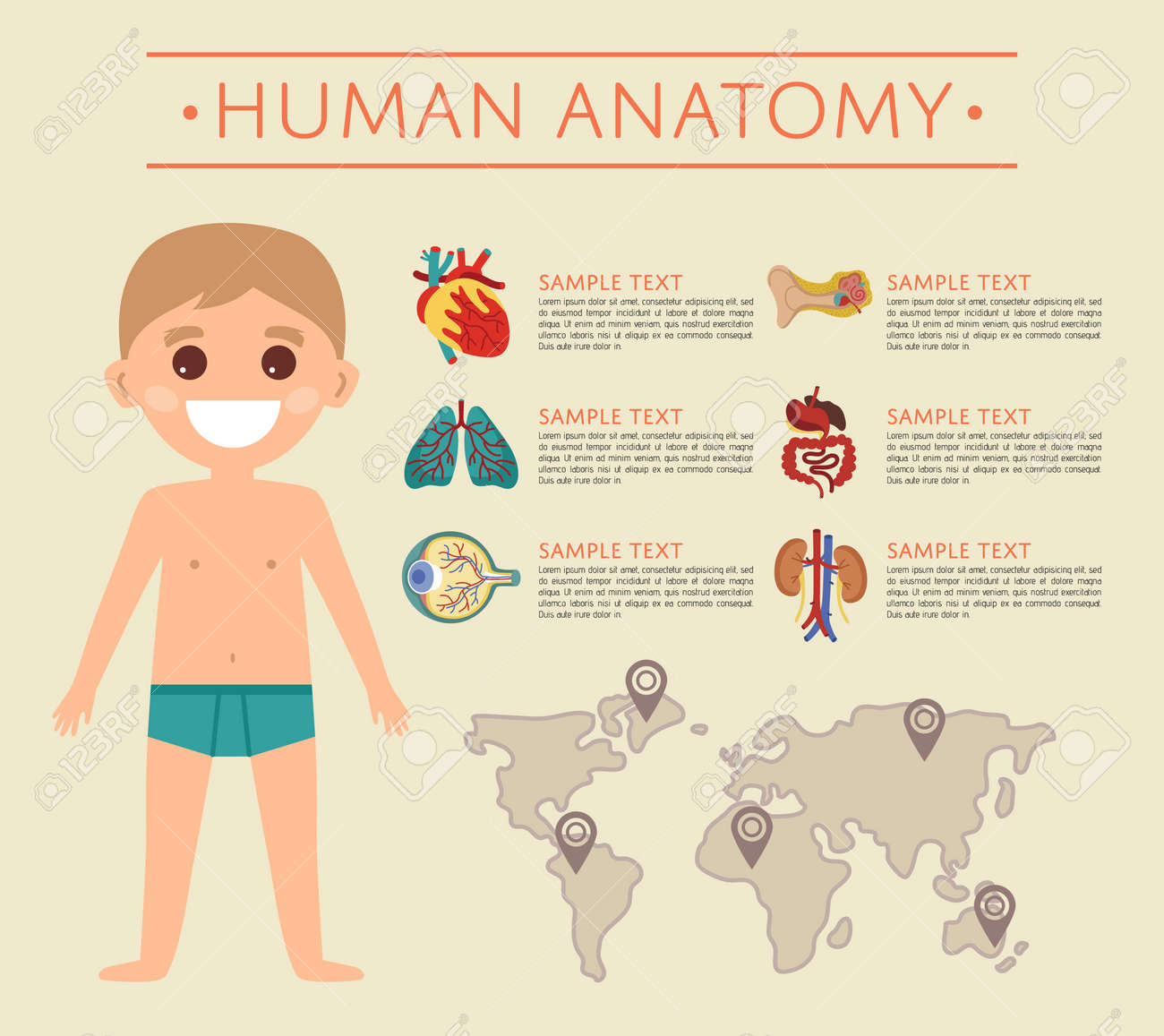Human Body Anatomy Poster With Smiling Kid. Kidney, Lung, Eye ...