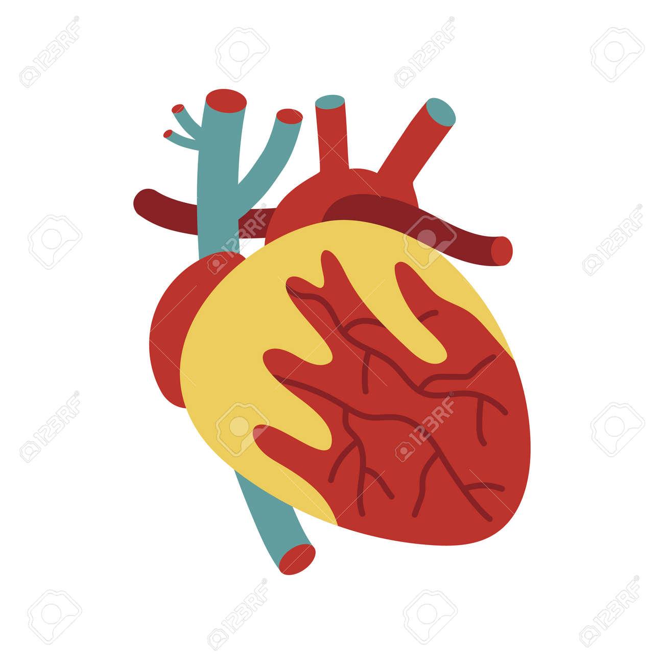 Icono Del Corazón Humano En Estilo De Dibujos Animados. Elemento De ...