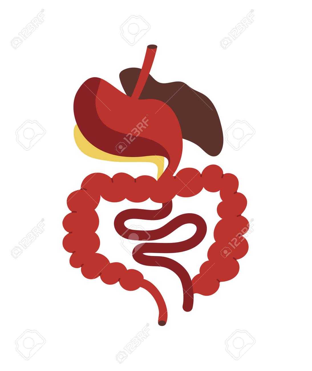 Icono Del Sistema Digestivo Humano En Estilo De Dibujos Animados ...