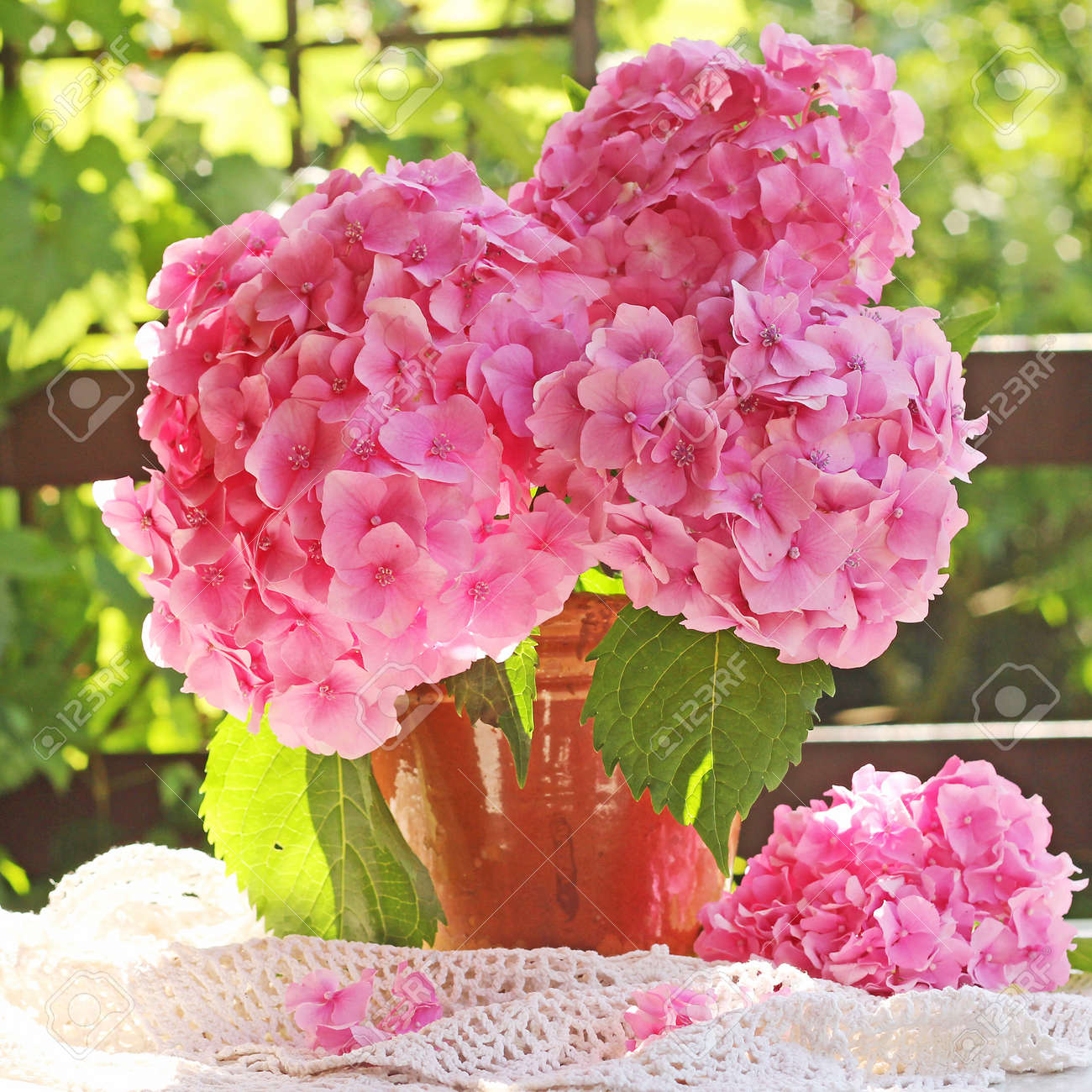 Hydrangea In Pot Stock Photo, Picture And Royalty Free Image. Image ...
