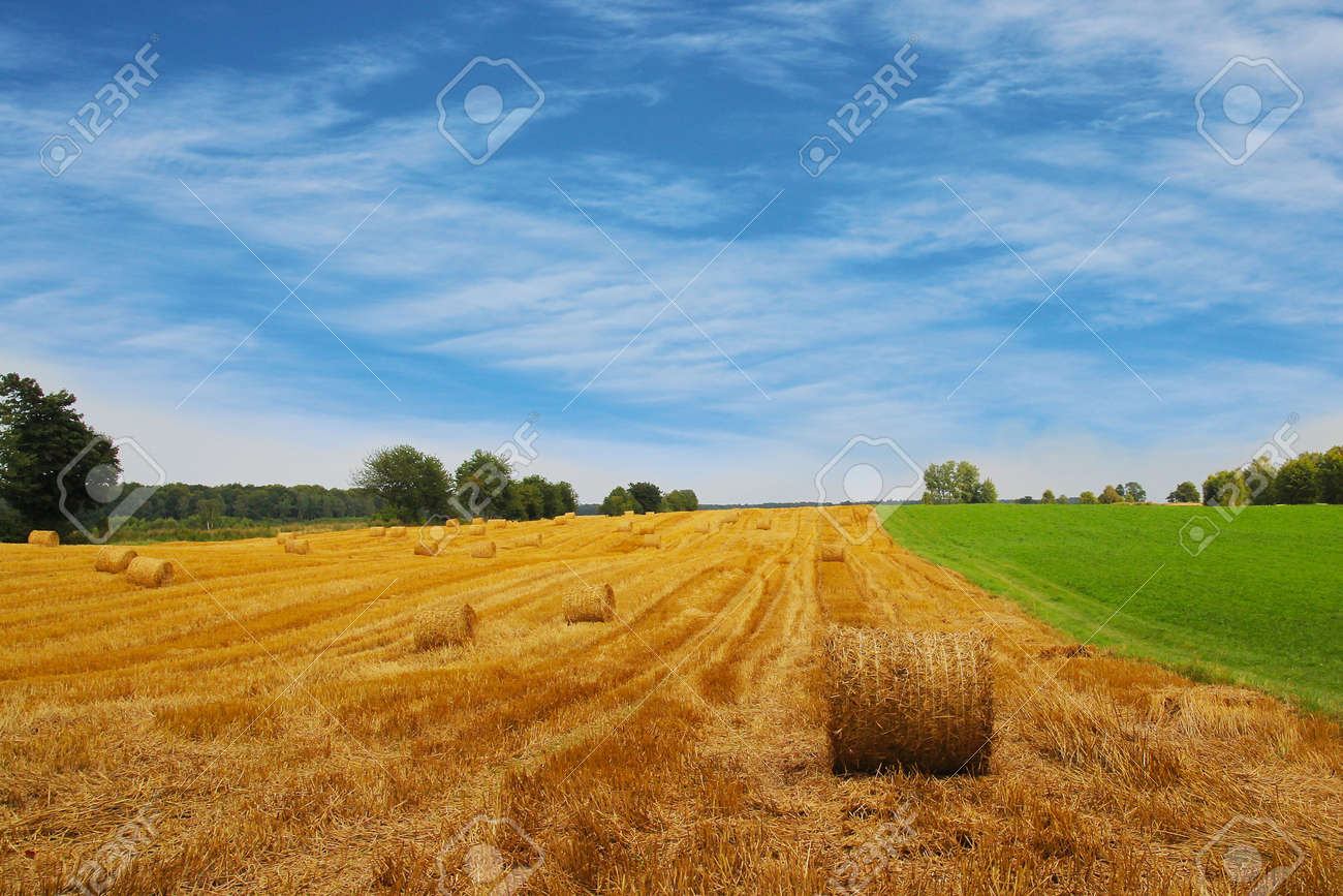 agriculture summer landscape, field wheat Stock Photo - 19202234
