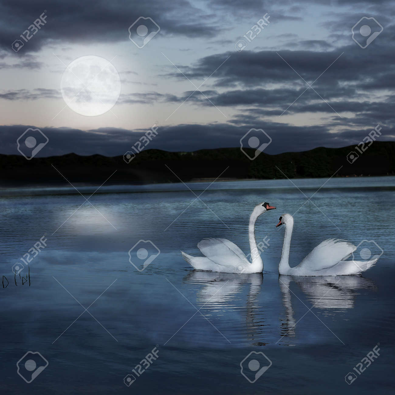 Swans By Moonlight >> Pair Of Swans At Night During The Full Moonlight Stock Photo