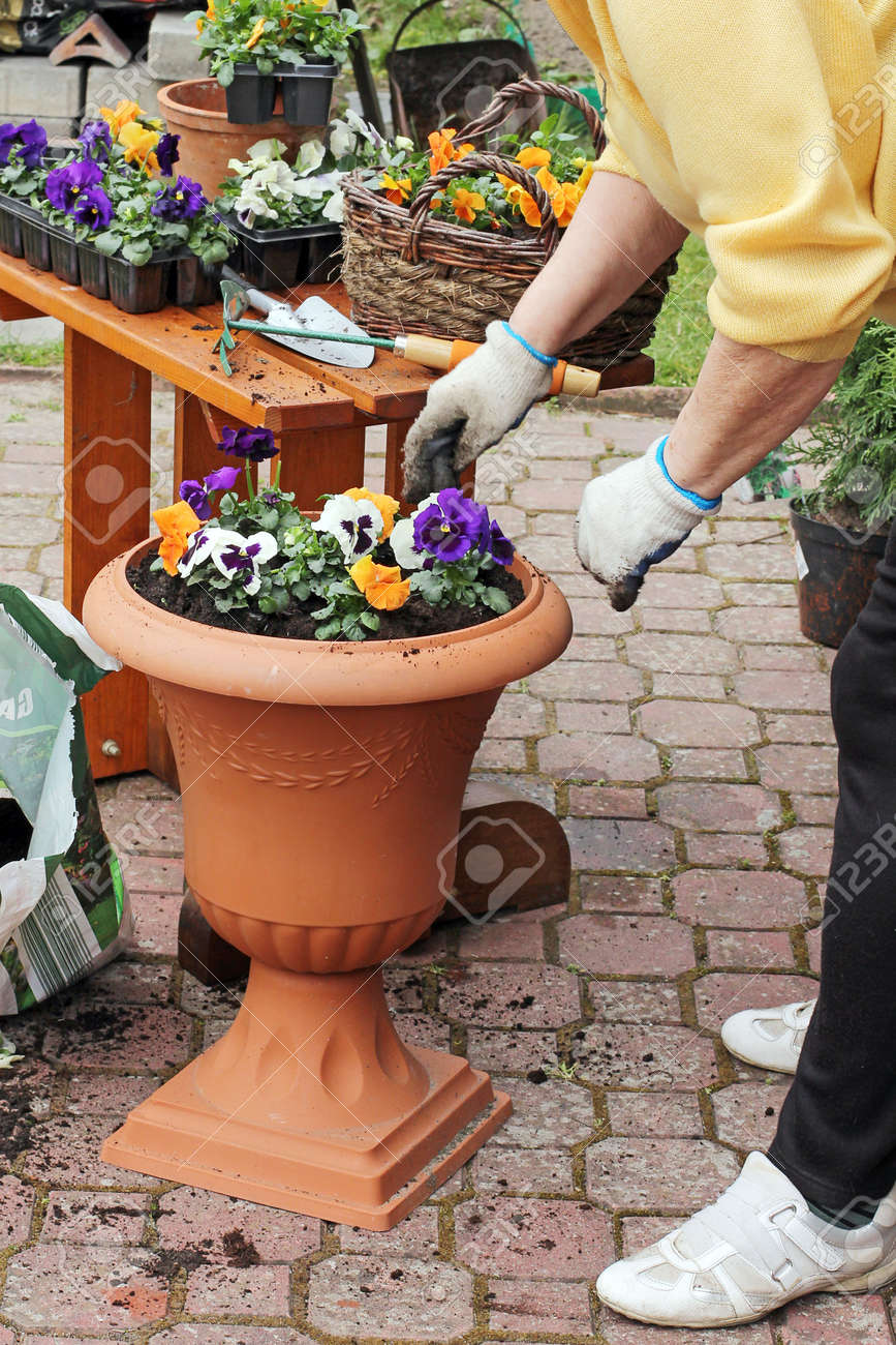 Spring in the garden potting flowers stock photo picture and spring in the garden potting flowers stock photo 38611672 mightylinksfo
