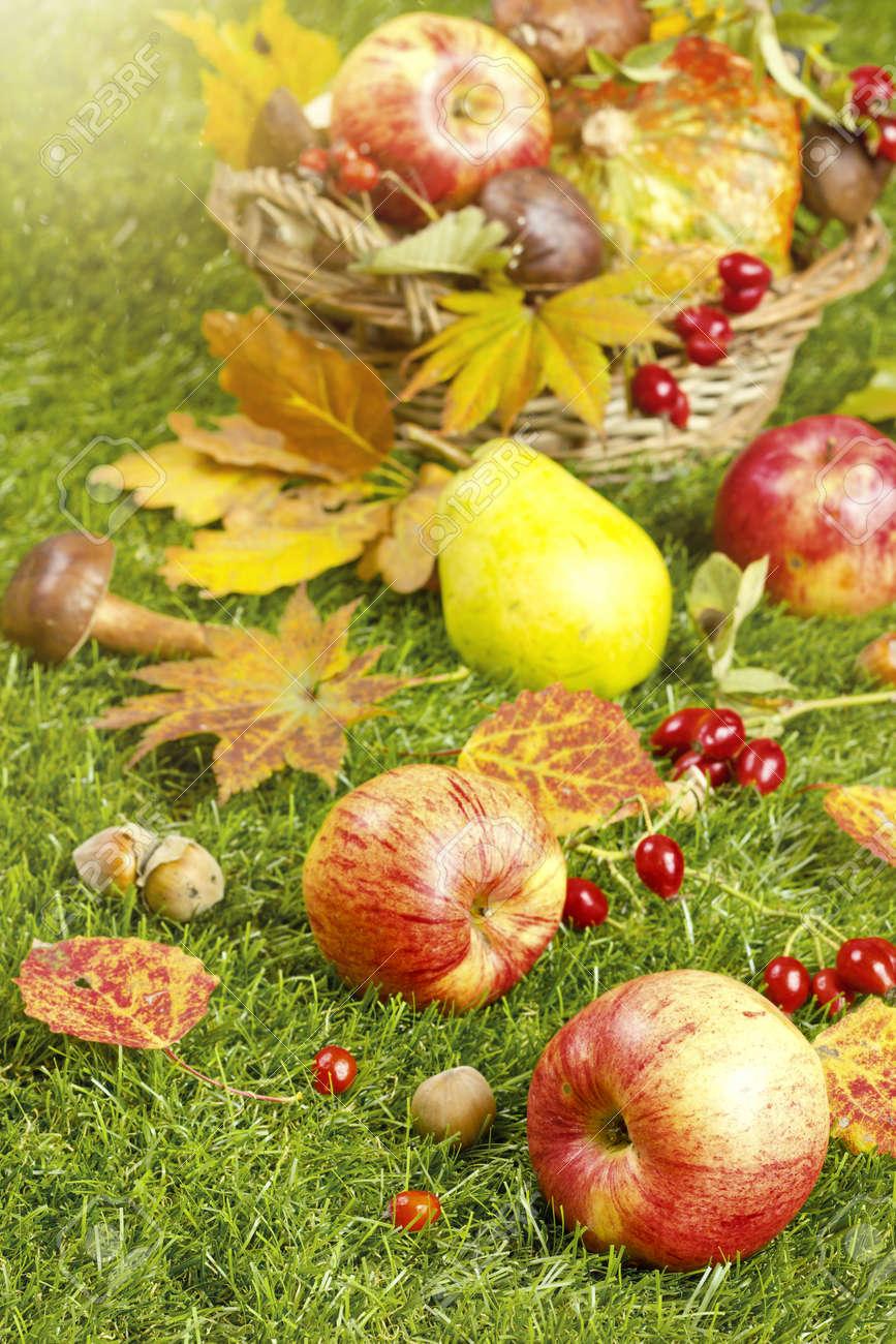 Herbsternte Im Garten Apfel Und Andere Fruchte Des Herbstes