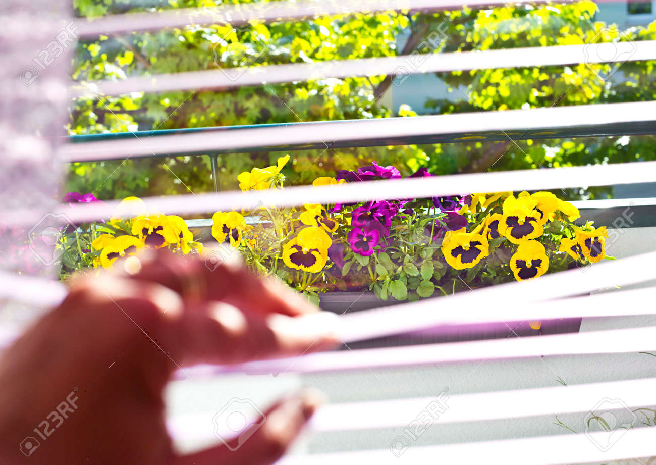 Many colorful pansies in the balcony window - 148534928