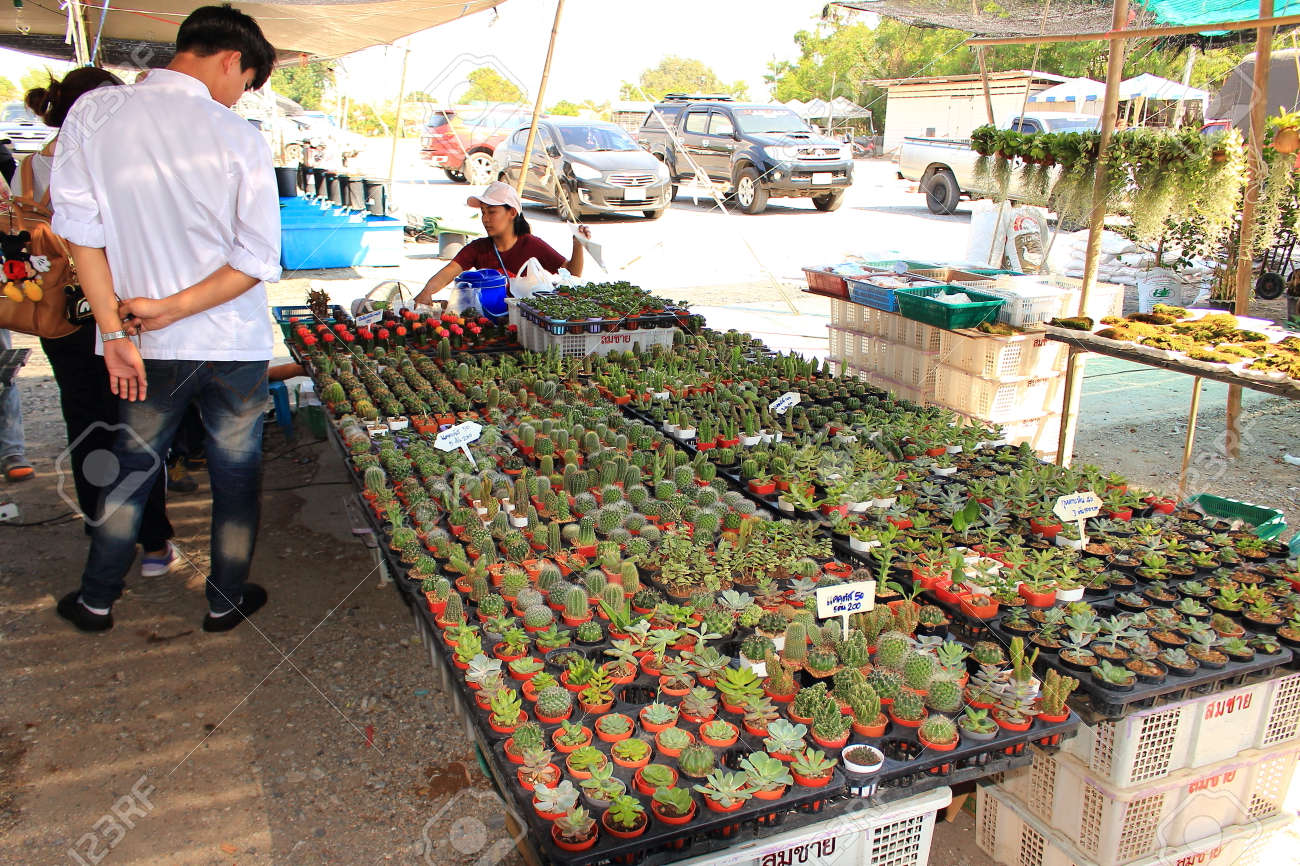 Pattaya City, Thailand - Mart 17, 2018: Sale of cactus and succulents