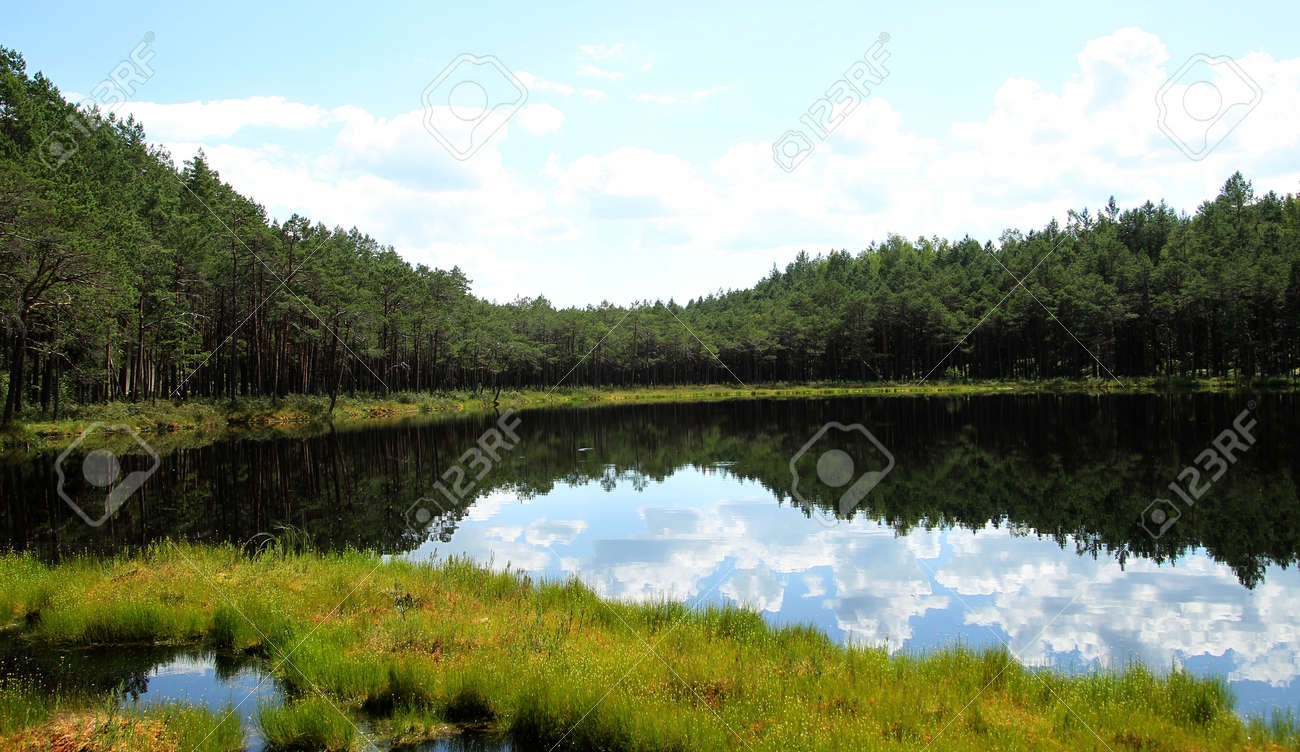 Landscape with trees and a small lake. Lithuania - 154877495