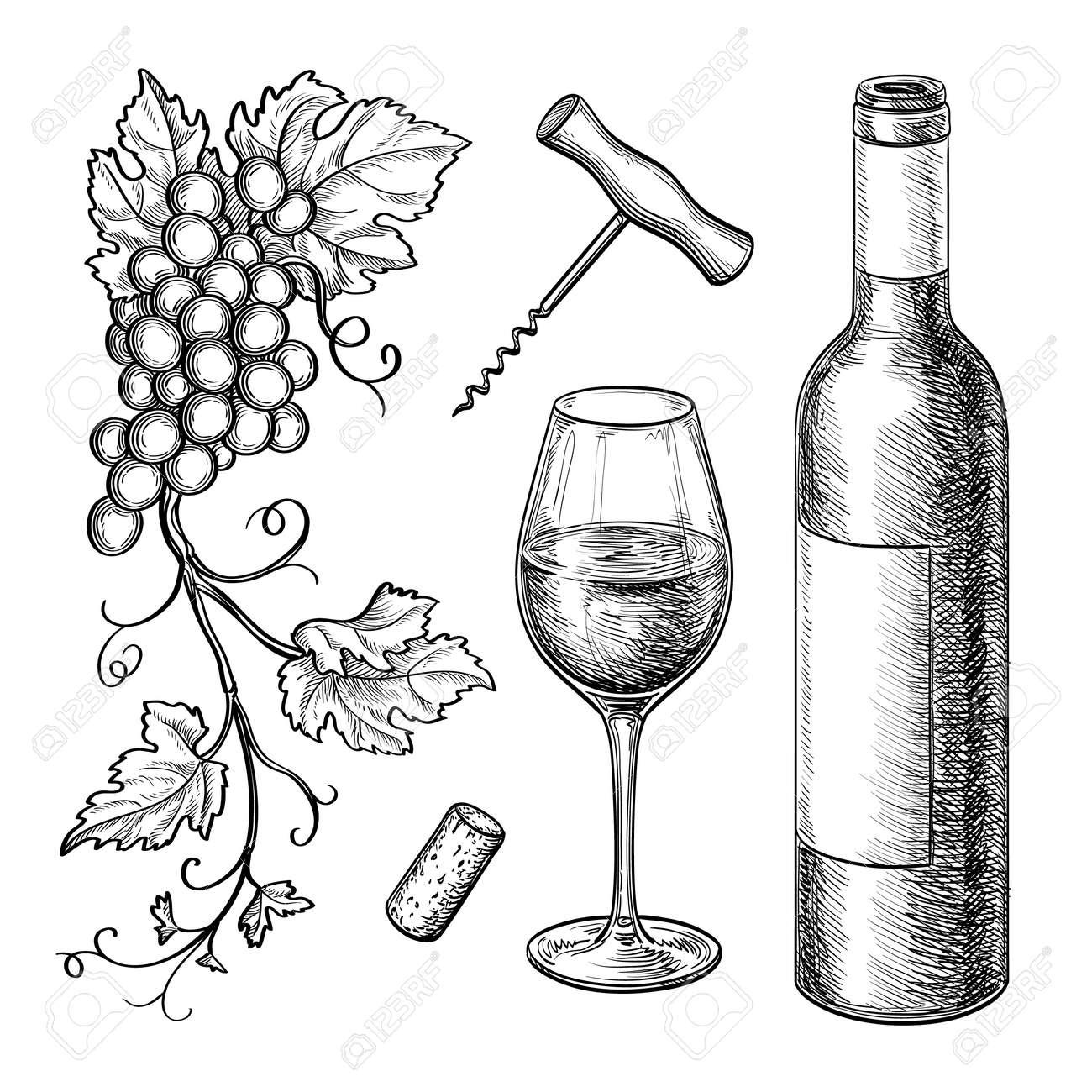 Branches de raisin, bouteille, verre de vin, tire bouchon, liège. Isolé sur fond blanc. Illustration dessinée à la main. Style rétro.