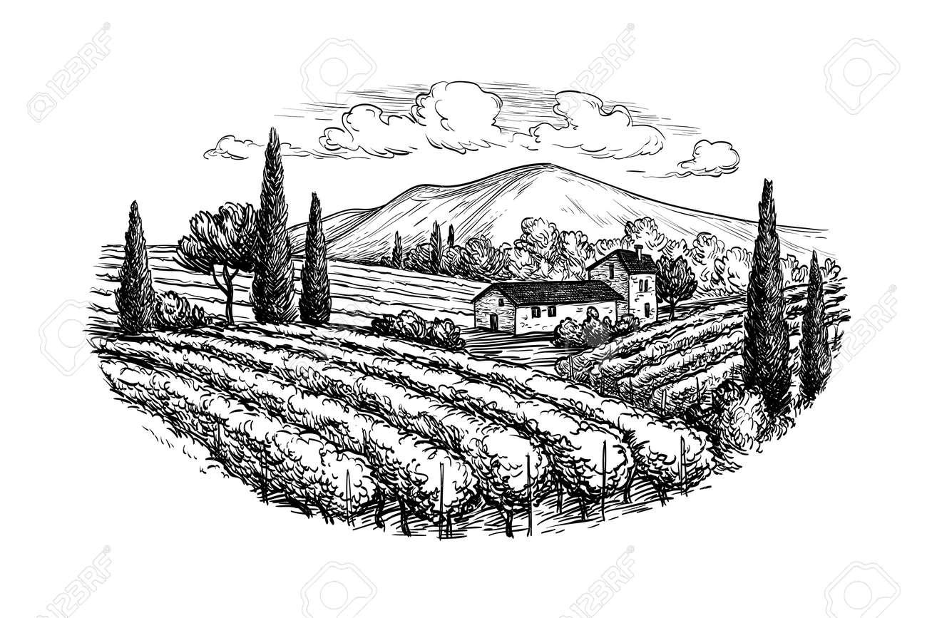 Hand drawn vineyard landscape. Isolated on white background. Vintage style vector illustration. - 64260152
