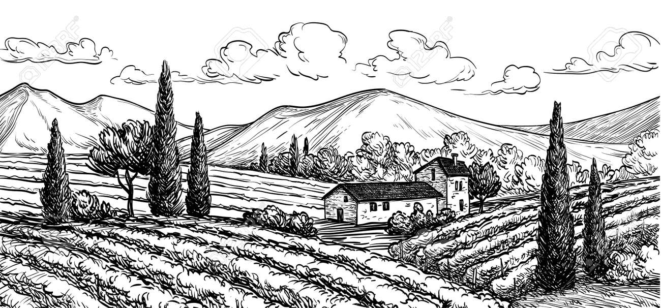 Hand drawn vineyard landscape. Isolated on white background. Vintage style vector illustration. - 66933090