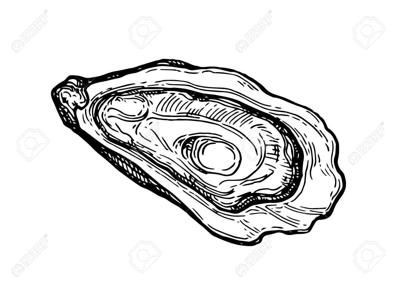 Oyster ink sketch. - 84356820