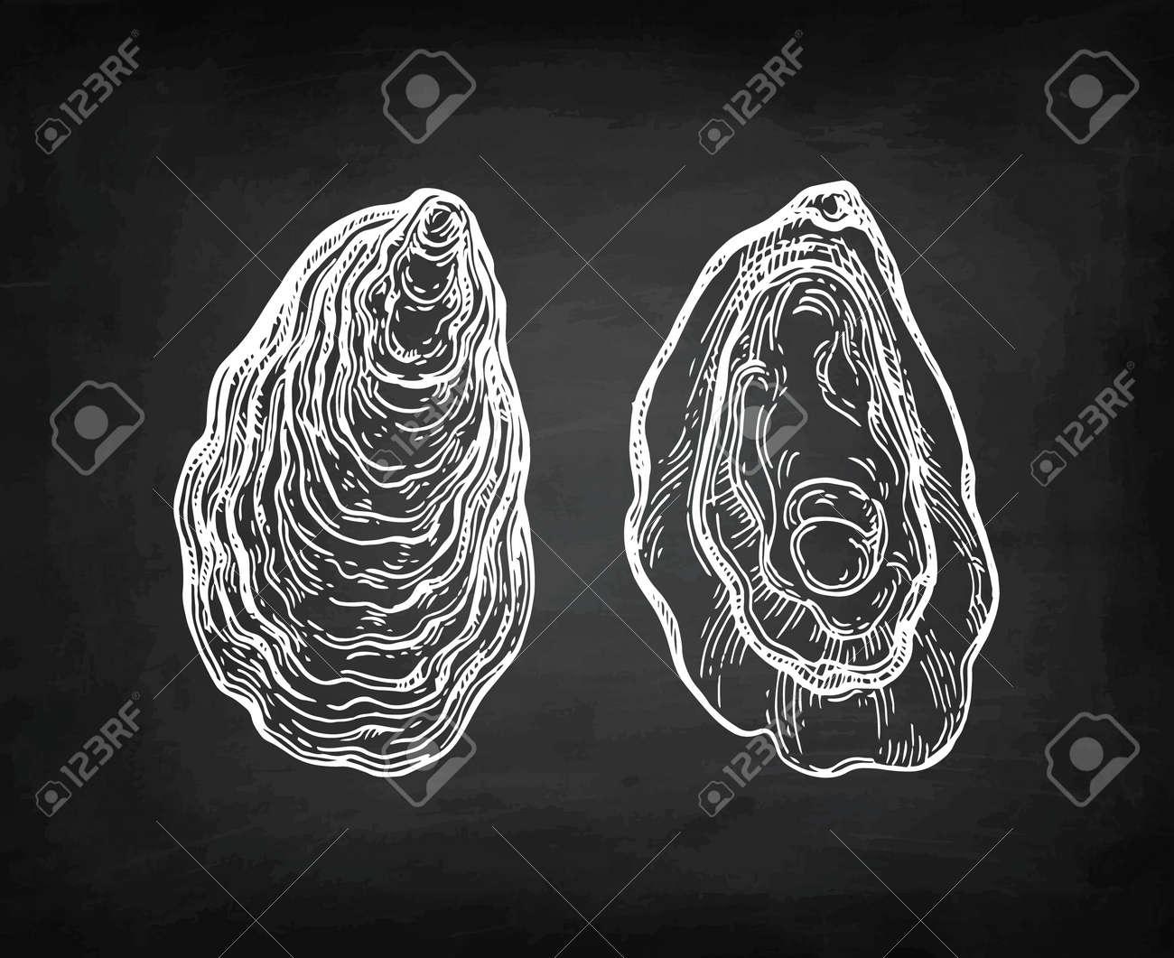 Oysters chalk sketch. - 87113881