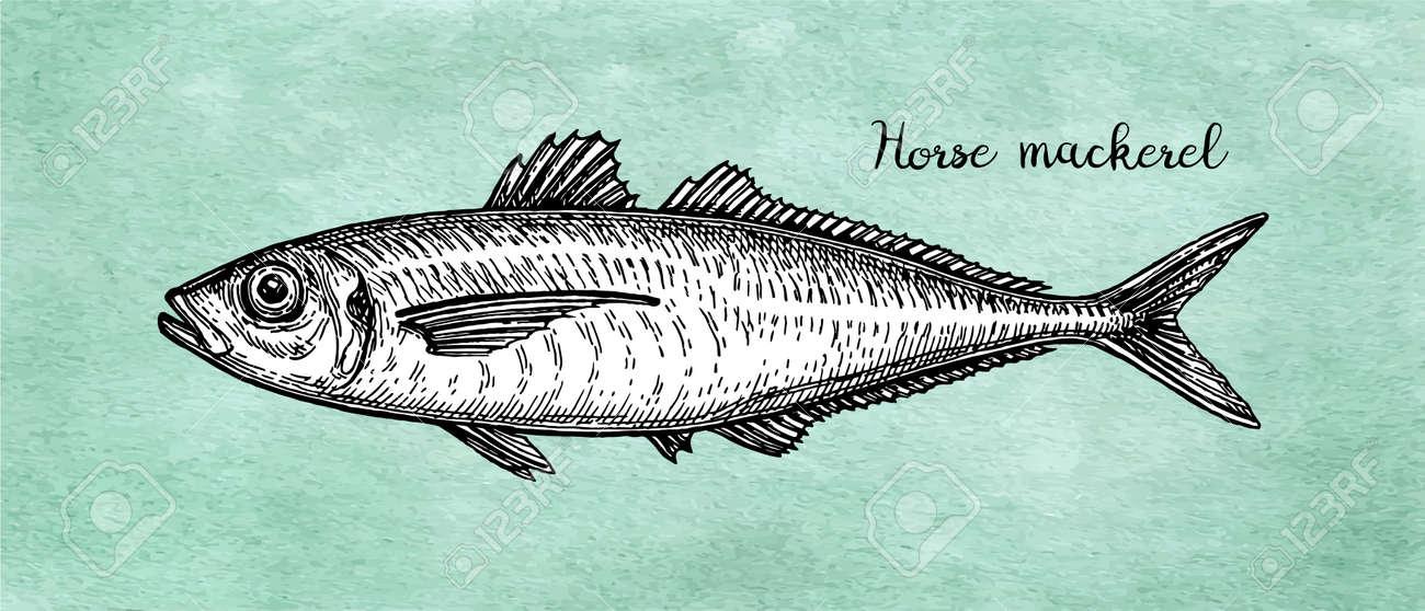Ink sketch of horse mackerel. - 103446445