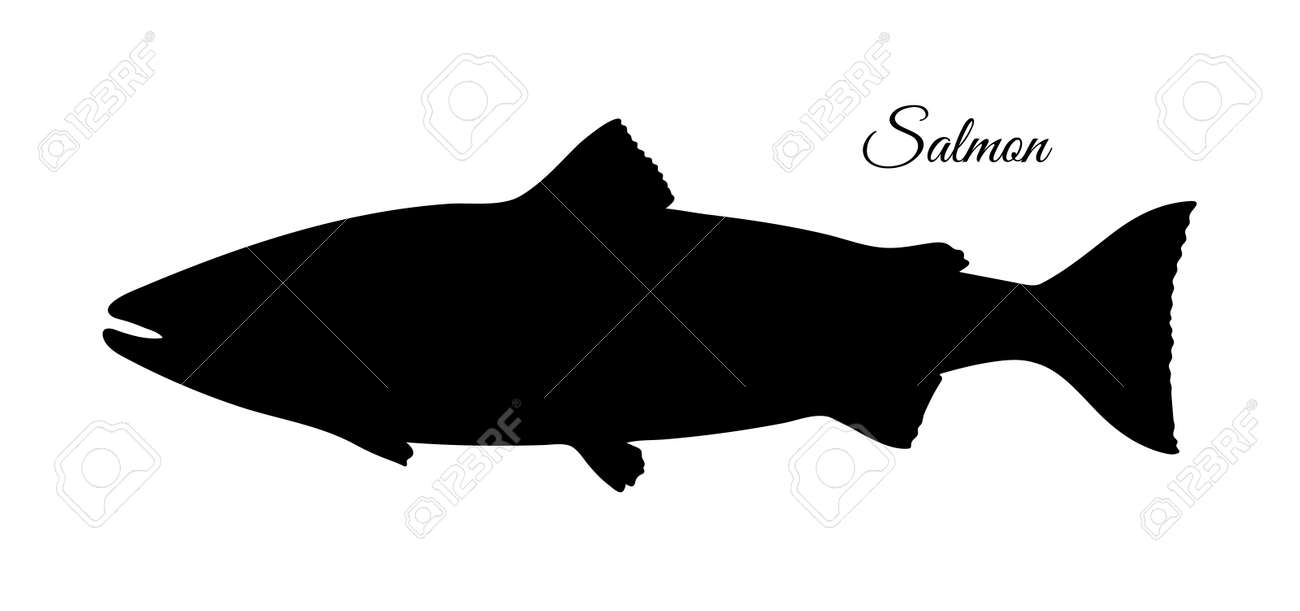 Silhouette of salmon. Hand drawn vector illustration of fish isolated on white background. Retro style. - 110278585
