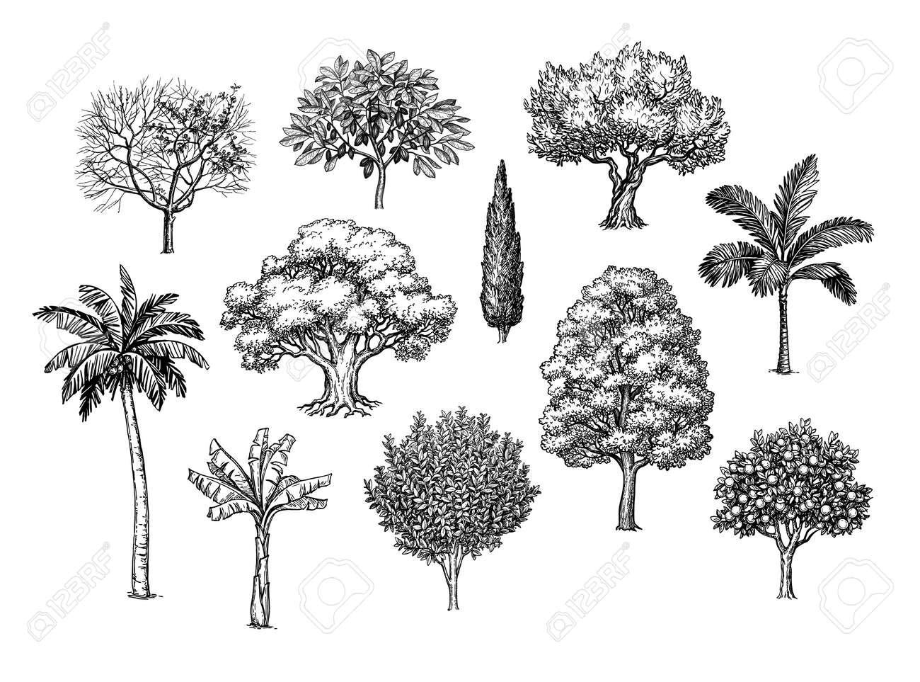 Ink sketch of trees. - 131416277