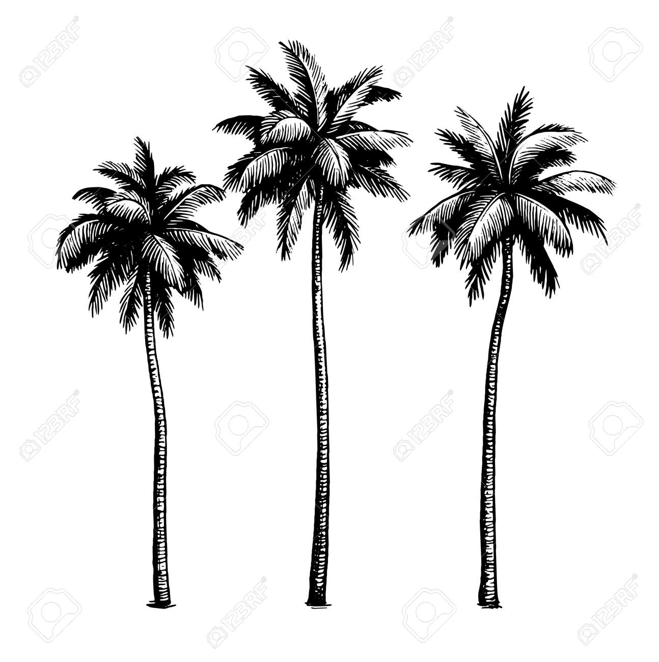 Coconut palm trees. - 166694197