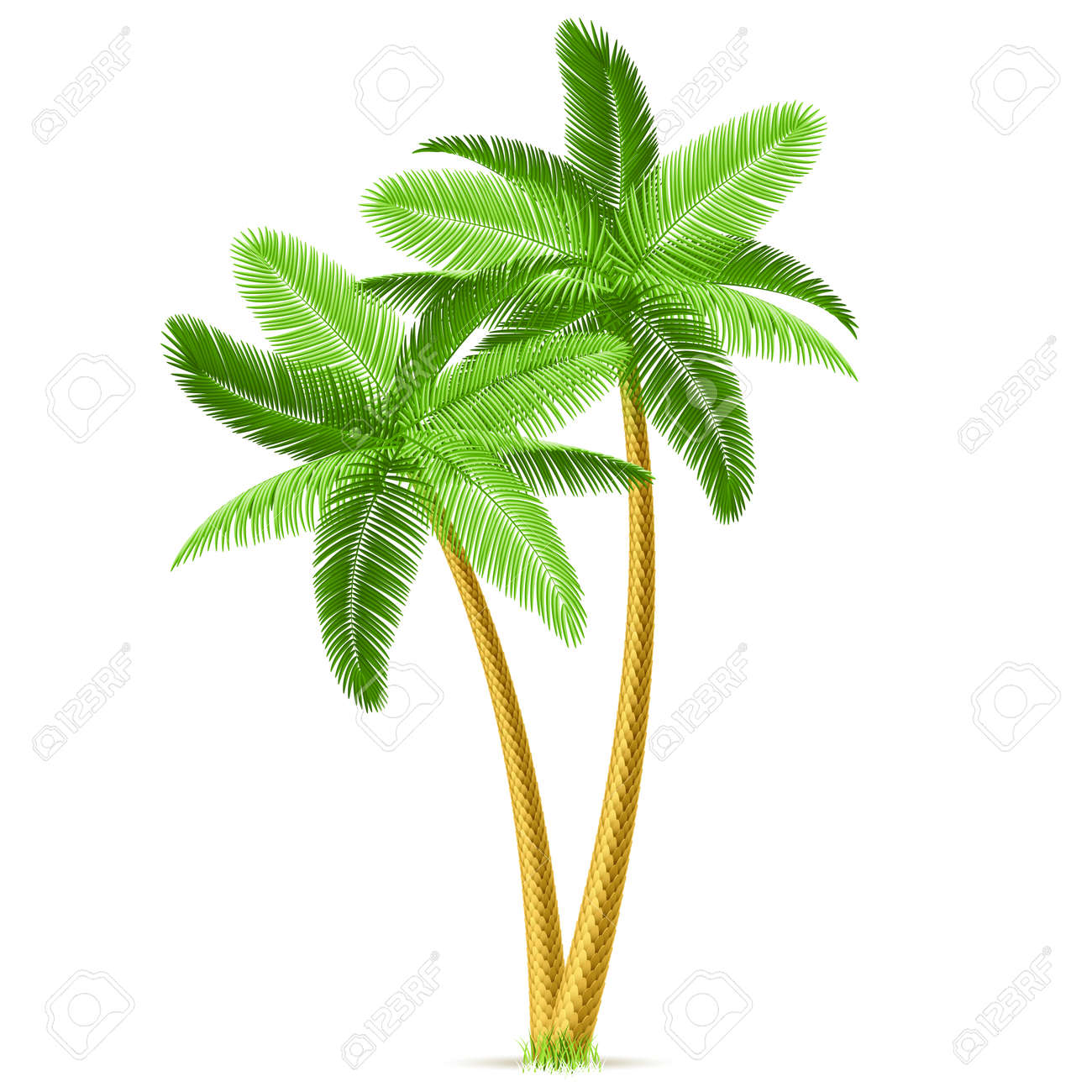 tropical palm trees royalty free cliparts vectors and stock