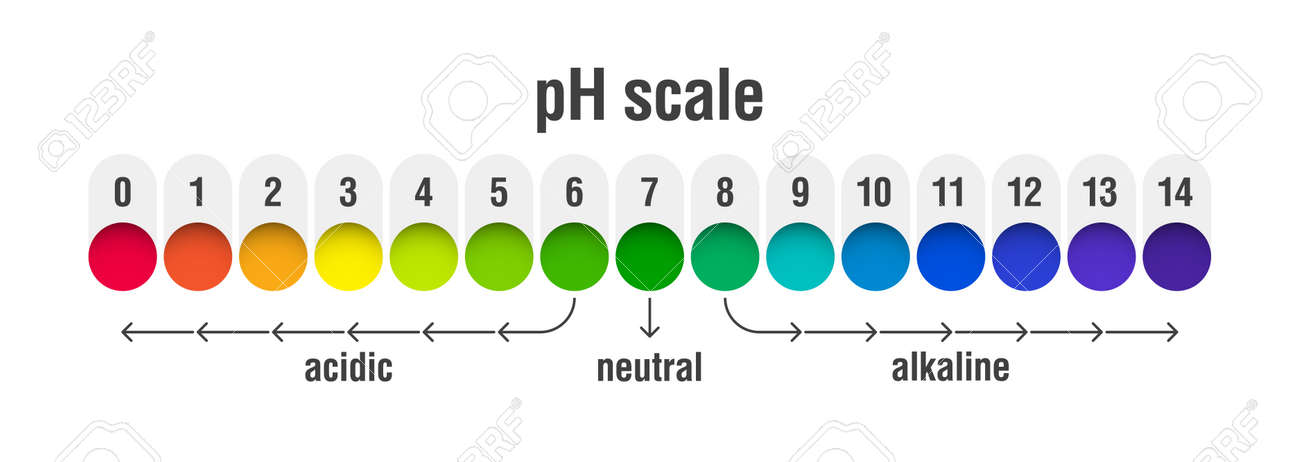 pH value scale chart for acid and alkaline solutions, acid-base balance infographic Vector illustration. - 100259923