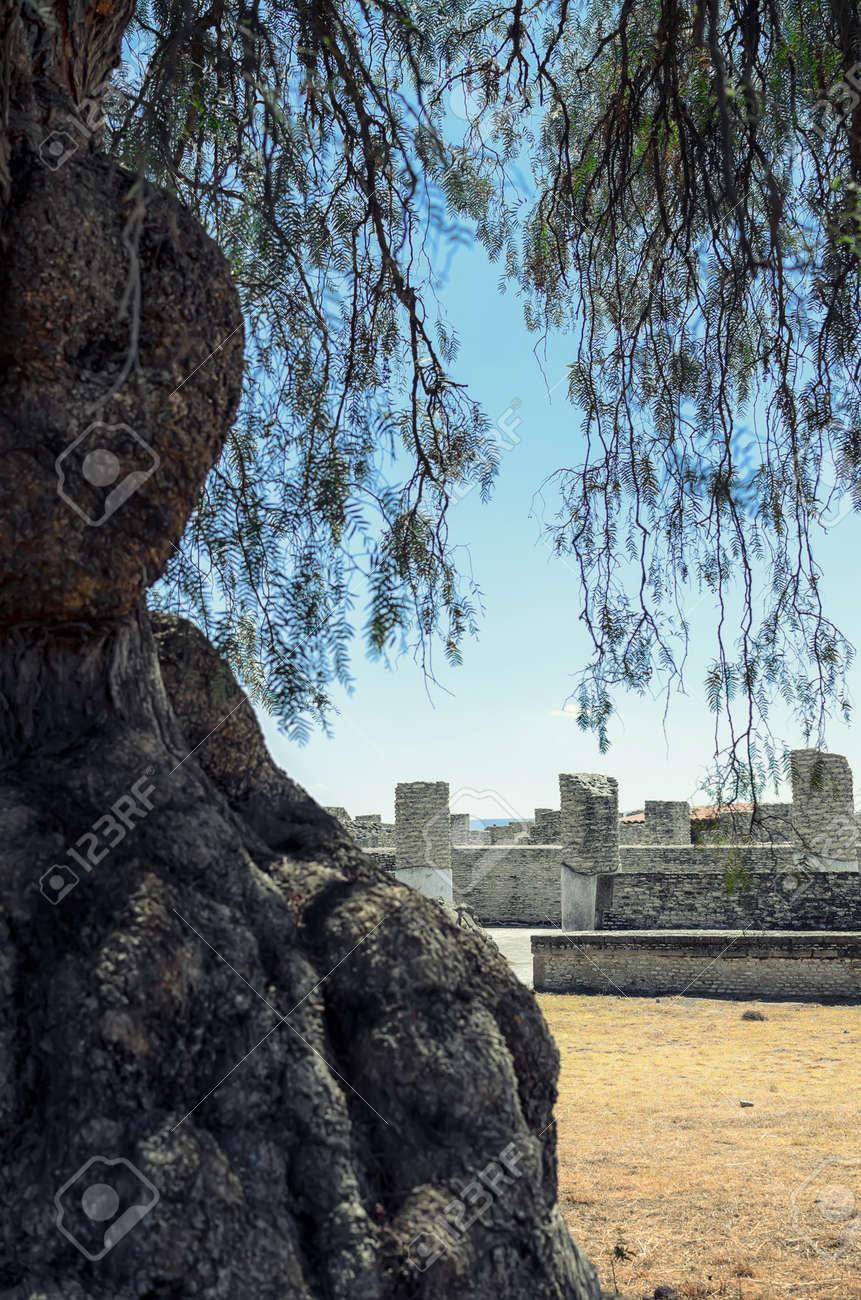 古い木の後ろに古代トルテカ文明...
