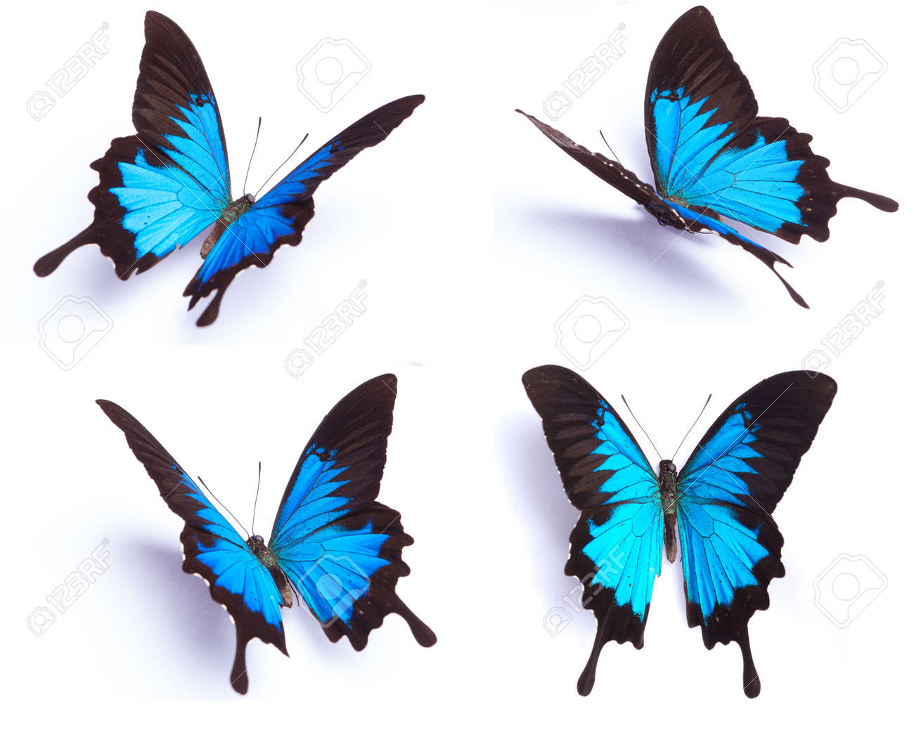 butterfly stock photos u0026 pictures royalty free butterfly images