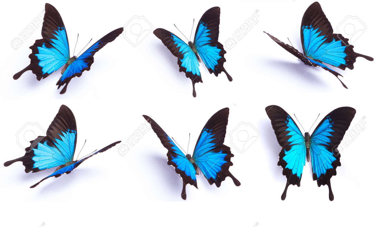blue butterfly stock photos royalty free blue butterfly images