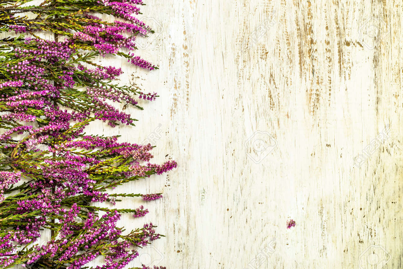 Flowers Of Heather In Purple Color On Rustic Wood Background