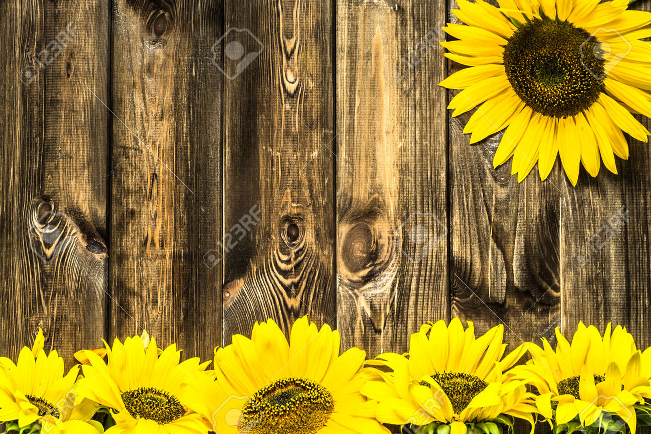 Sunflowers On Wooden Background Flowers Frame Stock Photo Picture