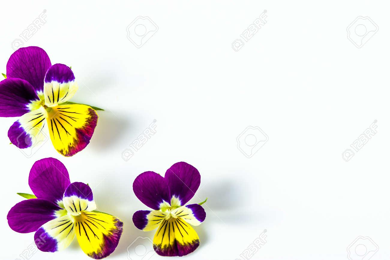 Schöne Blumen Rahmen Mit Veilchen, Blumenmuster Auf Weißem ...