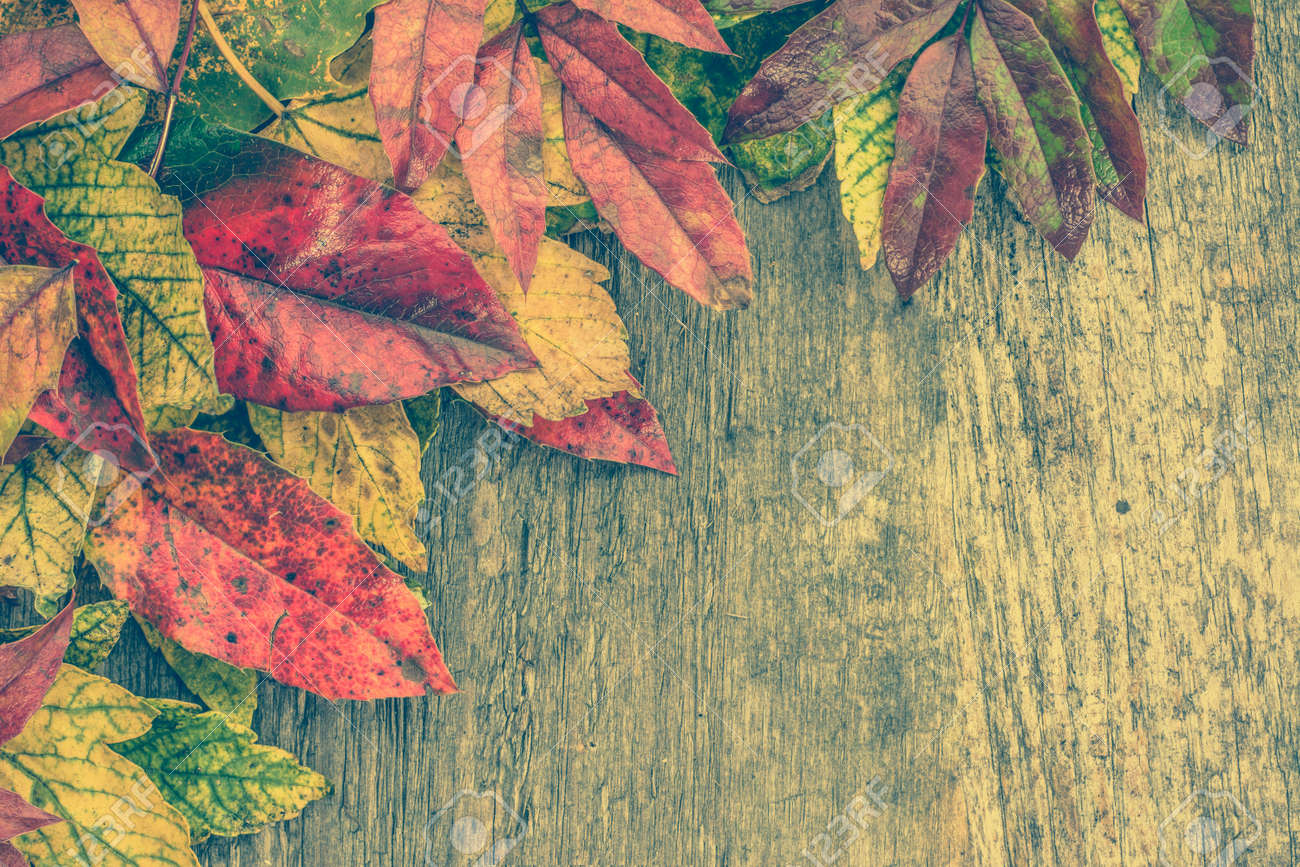 Autumn Leaves Background Fall Wallpaper With Colorful On Wooden Stock Photo