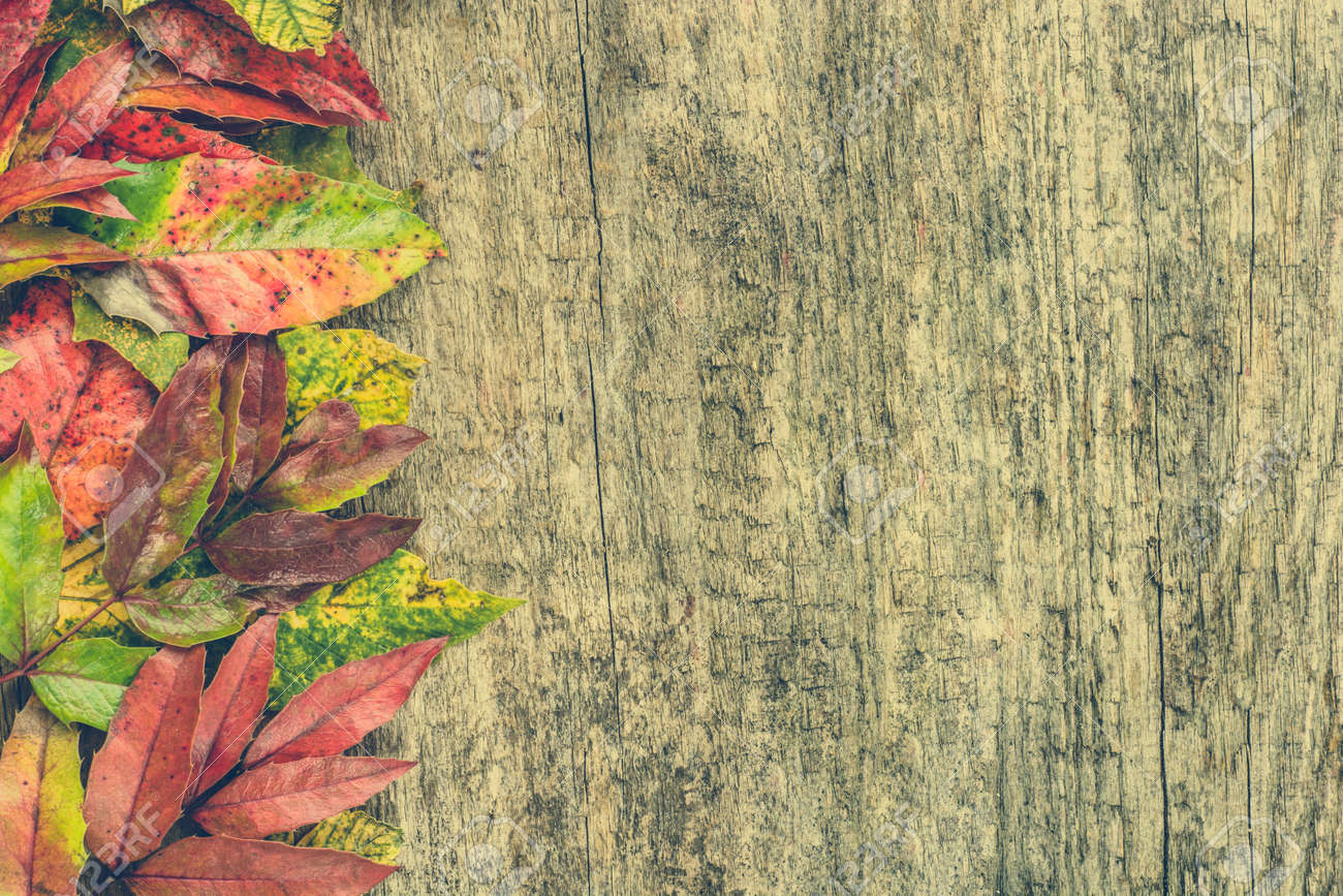 Colorful Leaves Autumn Border Background Fall Wallpaper Stock Photo