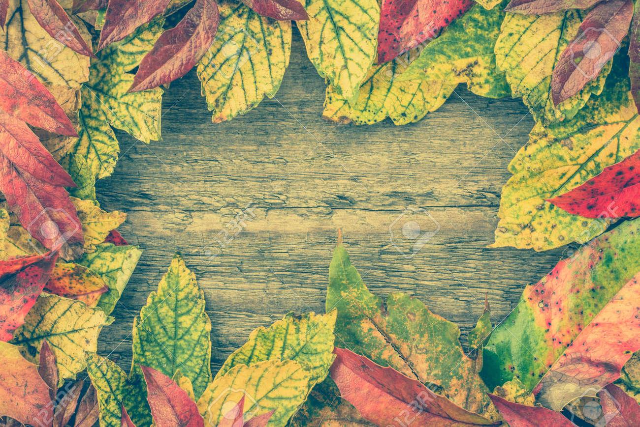 紅葉 秋の境界線の背景 秋の壁紙 の写真素材 画像素材 Image 82974810