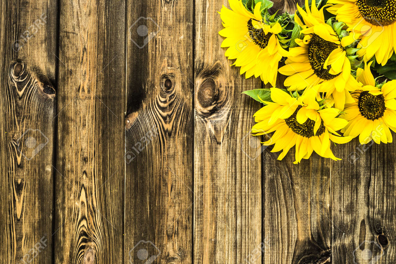 Sunflowers On Wooden Background Autumn Flowers Stock Photo Picture