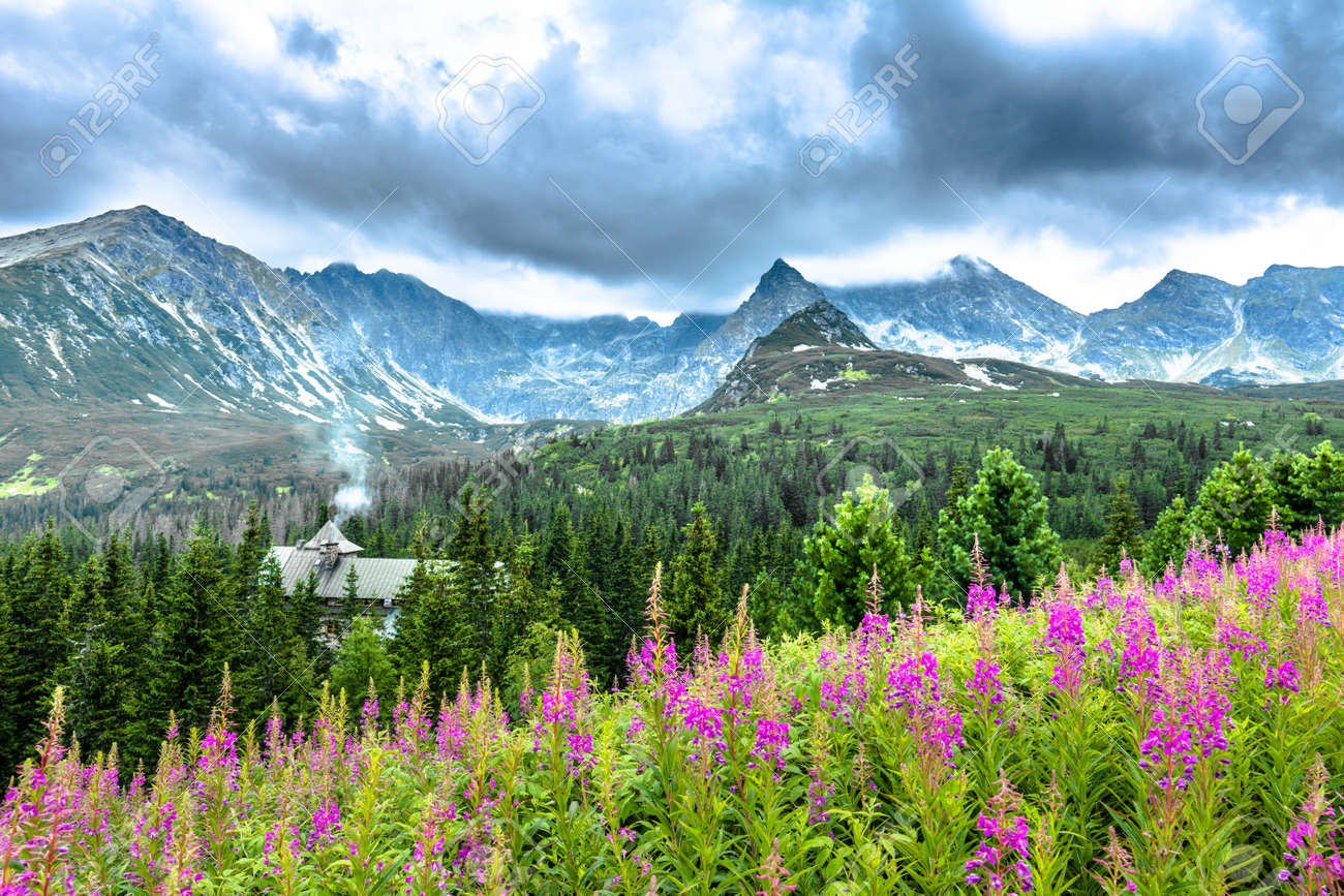 Landscape Of Mountain Flowers In The Summer Countryside Scenery Stock Photo Picture And Royalty Free Image Image 81941110