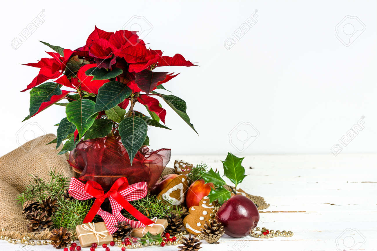 Christmas Table Arrangements Flowers.Christmas Table Decoration Christmas Composition With Red Poinsettia