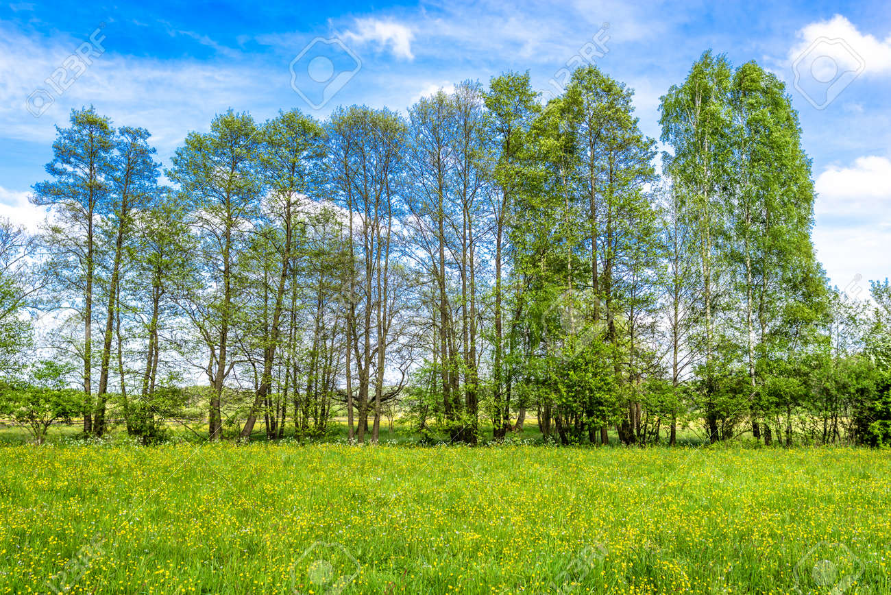 Grass Field With Flowers With Grass Field Green Spring Landscape Of Meadow With Flowers Stock Photo 95333507 Field Green Spring Landscape Of Meadow With Flowers