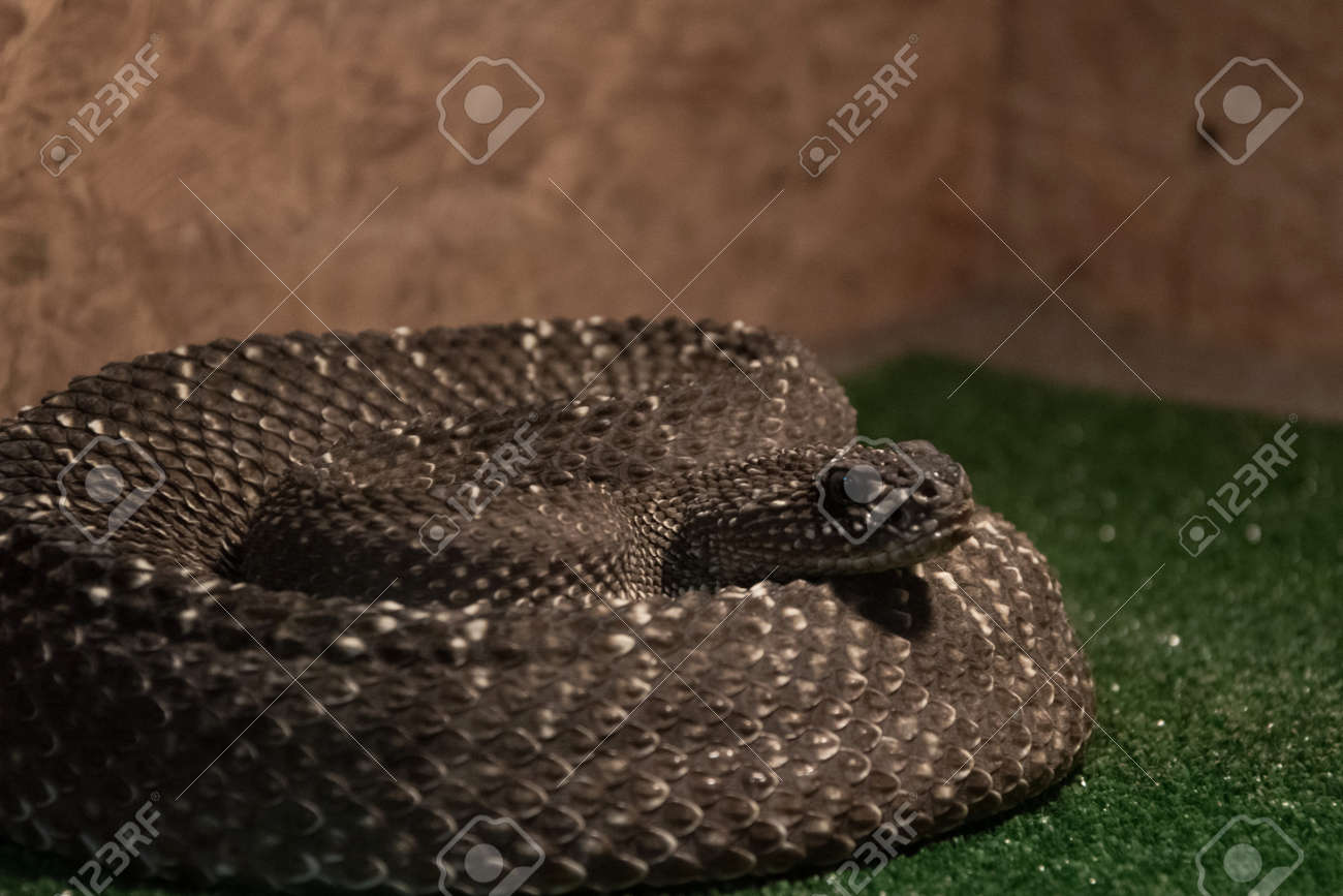 fine ring snake tradesy h diamond i