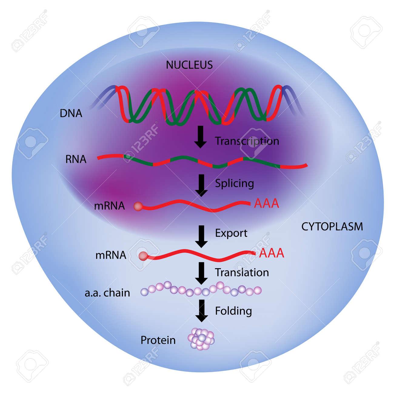 biologie moleculaire la