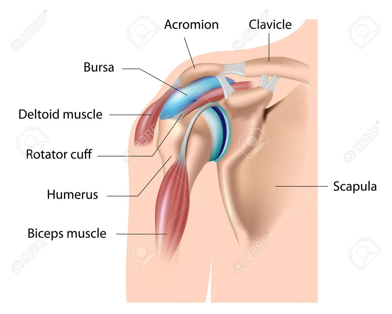 Shoulder bursa, bursitis - 16939588