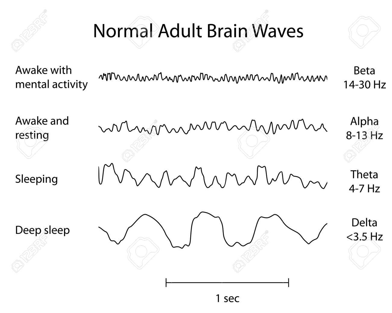 normal brain waves eeg royalty free cliparts vectors and stock