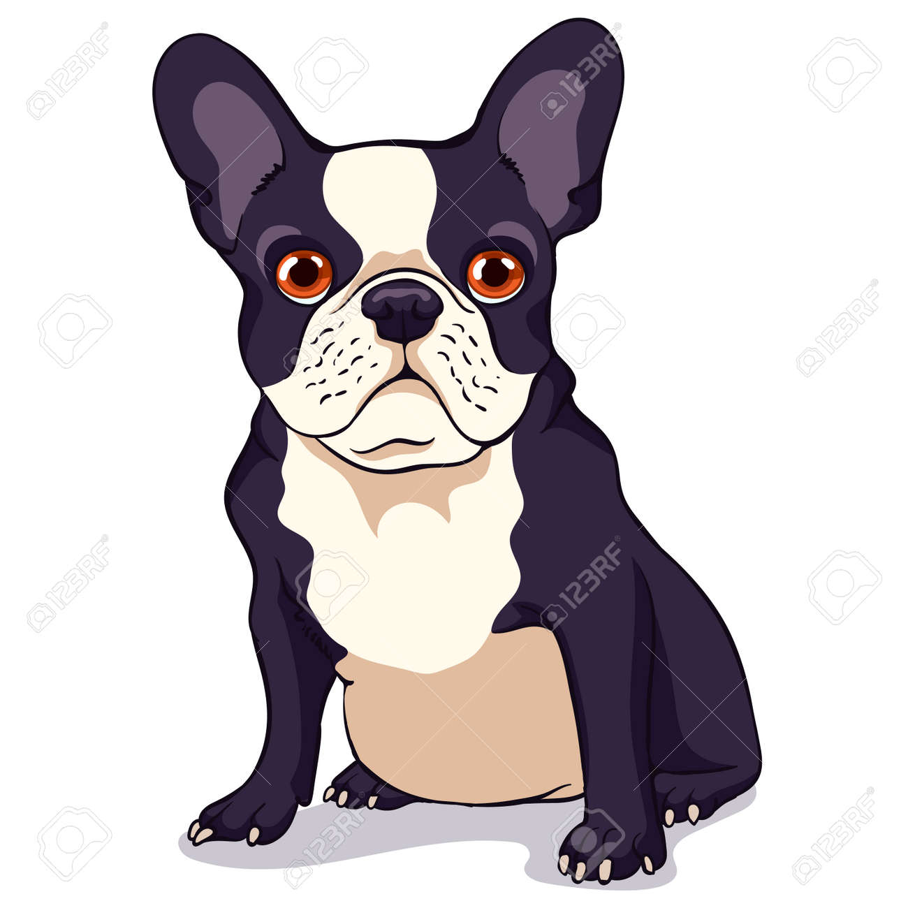 Cute French Bulldog With A Black And White Color Of Wool On A
