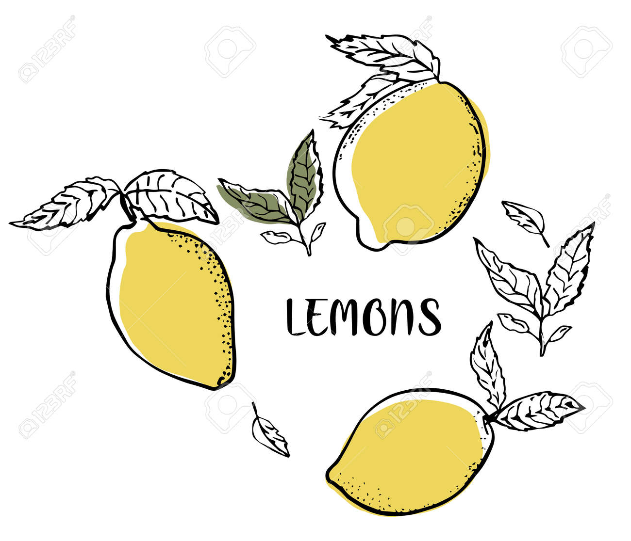 Fresh lemon fruits, collection of vector illustrations with leaves and text. Set with lemons. - 154725352