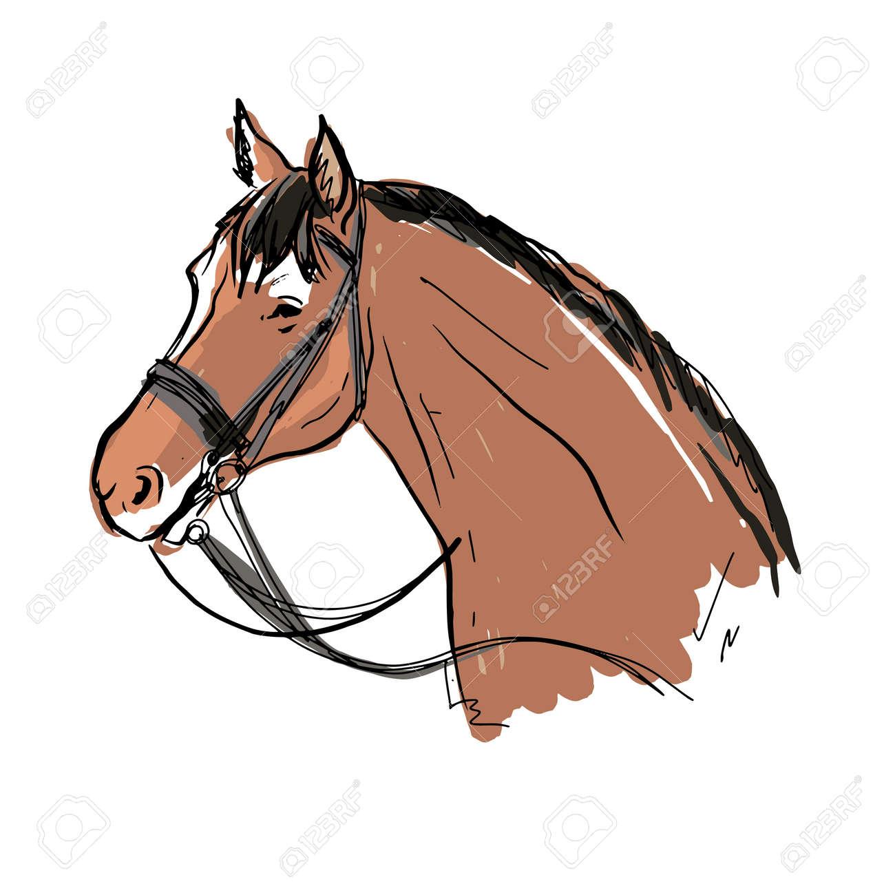 vector portrait of horse. morgan breed.brown horse - 158589833