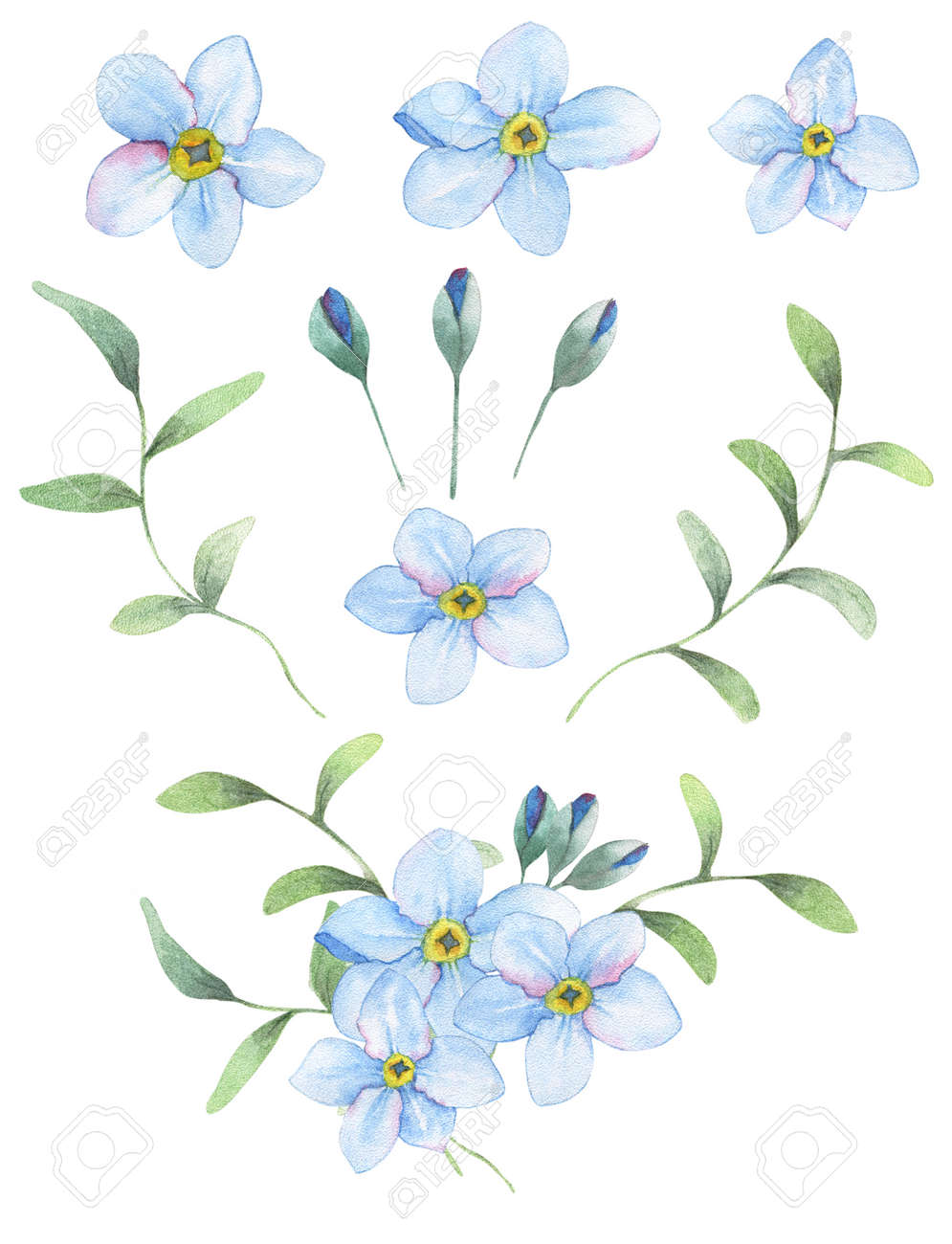 Foget-me-not flowers painted in watercolor. 9 isolated objects + bouqet from this elements. - 54341117
