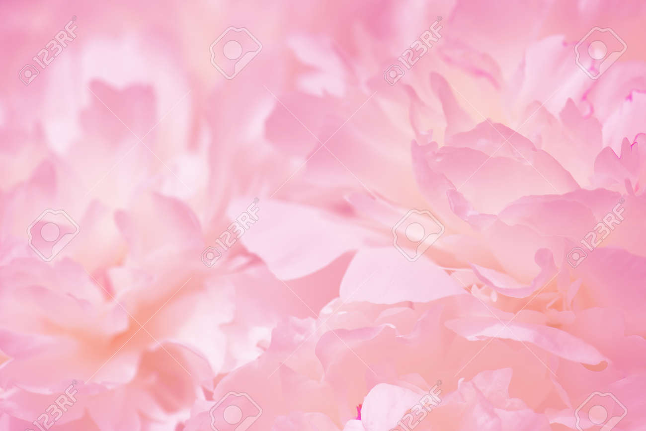 Tender pink background of fresh peony petals, close up - 168917537