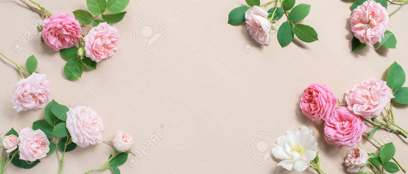 Tender banner of pink roses on textured beige background, copy space - 168917539