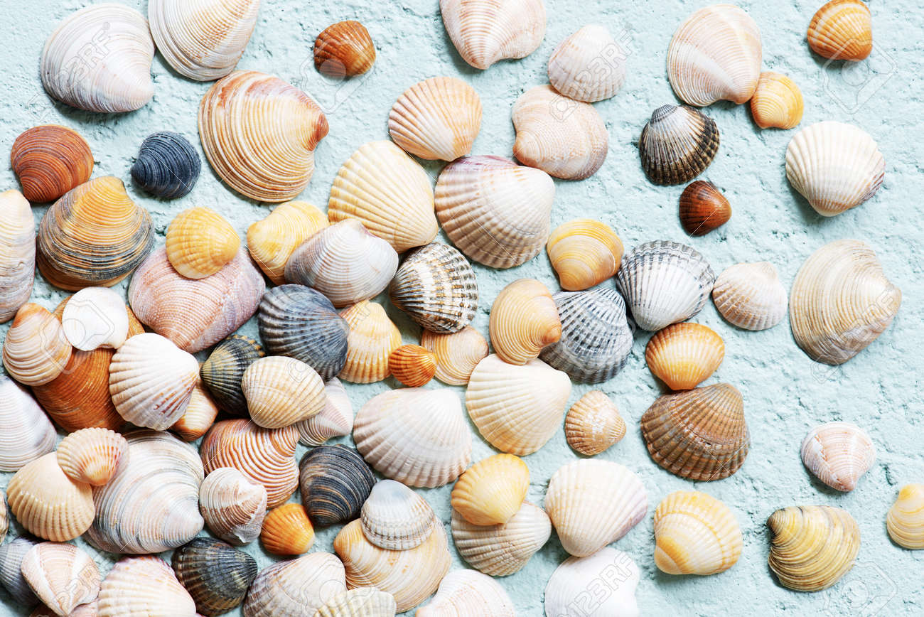 Seashells on the blue textured background, abstract travel top view composition - 168917549