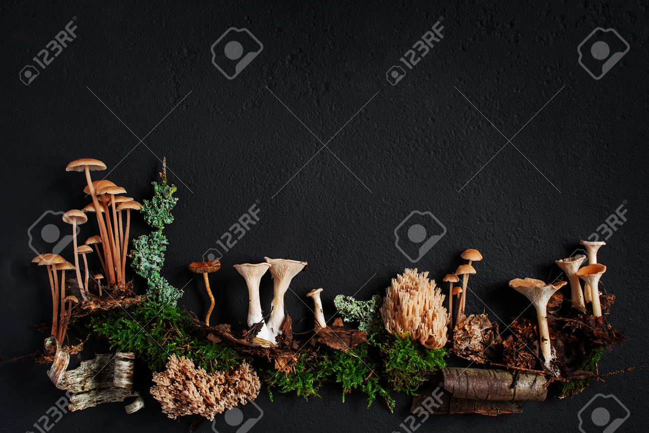 Background with elements of wild autumn forest on the black textured surface, copy space - 168918078